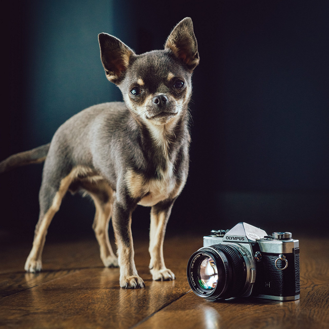 I'm Dan, and usedlens.co.uk is a product of the the Covid-19 pandemic.  When the UK went into lock-down, in March 2020, all my professional photography bookings were cancelled and I was…